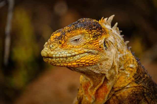 dragon lizard head